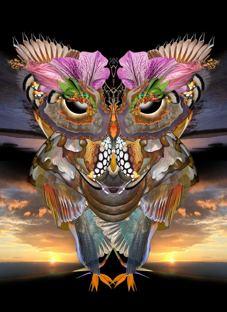 owl no 28 GENESIS